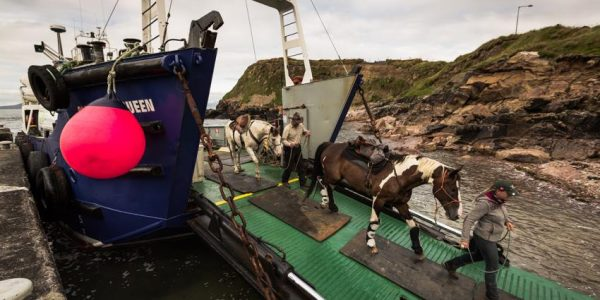 Clare Island cargo service horses coming off ferry